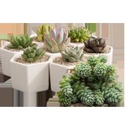 plantes pot